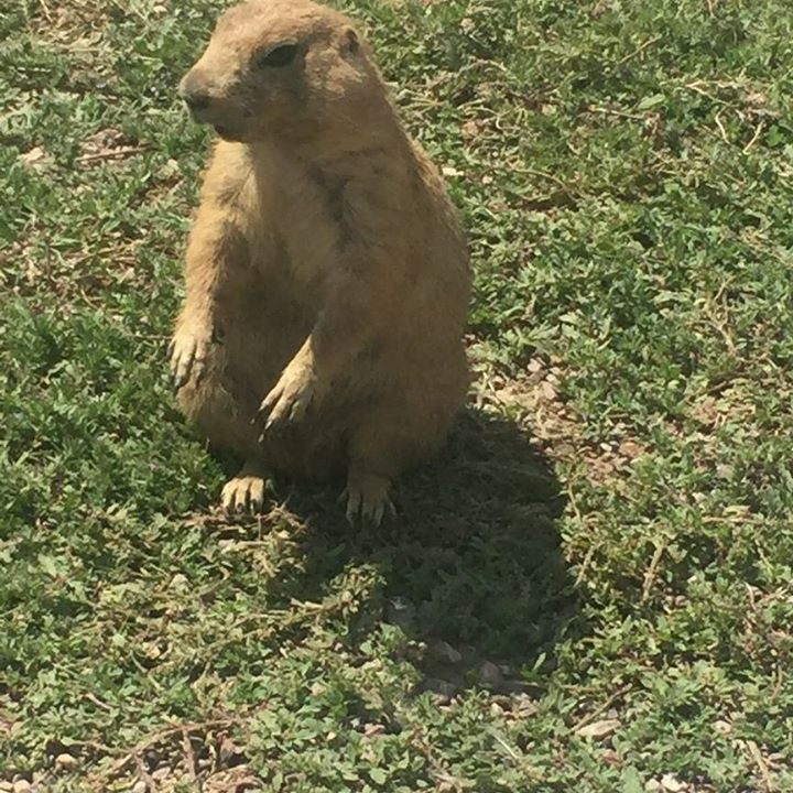 Prairie dogs from Cody motorcycle accident attorney image
